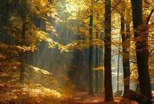 Lesy a lesní cesty