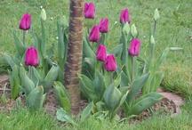 Gärten, Blumen & Co.