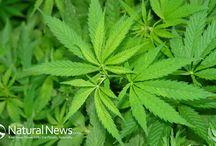 Cannabis For Healing