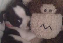 Puppy Love / by Elissa Carey