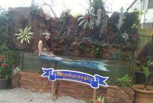 Special Design 3D Aquariums / Special Designed Aquariums