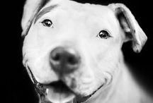 Pet Adoption Marketing Ideas / by Megan Latshaw