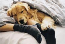 Pups <3