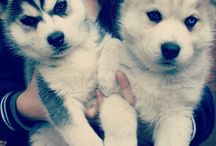 baby dogs / by shanatta montejano