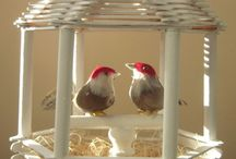 kuşluk