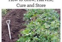 Gardens - Sweet potatoes