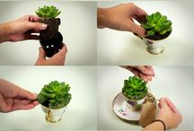 plants in a tea cup