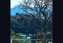 晩秋の里の趣きですね。 a persimmon tree #persimmon #lateinautumn #forest #晩秋 #柿の木 #田舎の風景写真