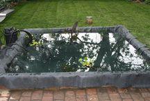 koi pond ideas / by Marcus Roland