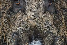 【生物】哺乳類