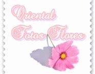 Oriental Fotos Flores