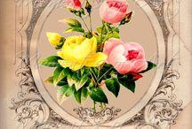 çiçek. resimleri