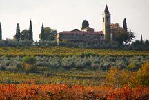 autunno nelle terre del Custoza / Ecco i colori delle nostre terre in autunno