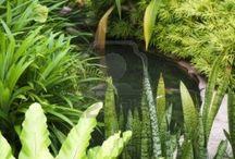 trópusi kert