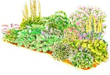 GARDEN  / by Cathy Whittemore