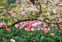ambiance printemps