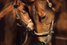 paarden / over mooie paarden foto's of plaatjes