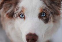 My Favourite Dog Breeds / by Hardly Hedda