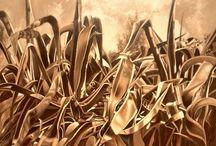 """""""TENSIONI"""" - Personale di Stefano Masili / Dietro le foglie raggrinzite, sotto i filamenti e gli aculei pungenti….nel cuore dell'oscurità ha vita l'incanto! Stefano Masili, nato a Carbonia nel 1952, rende le sue figure plasmabili, distorcendole e sottoponendole ad uno sforzo di trazione. In un atto liberatorio lascia quindi spazio alle """"Tensioni"""": bordi frastagliati e vibranti divengono linee nette, ferme e gelide. La vita si congela, ibernata in un istante e protesa all'infinito."""