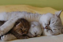 Kitties! / by Elendae