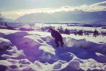 Snow @Falchetto