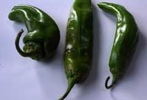 Chili Peppers / Did you know there are over 1,500 varieties of chiles? Photos of them go here....