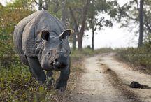 Best of animal photographs