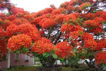 Drzewa, palmy ...