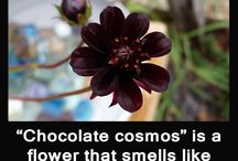 Chocolate Interesting Facts