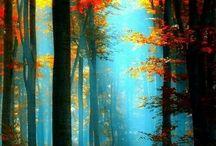 A Blaze of Colours