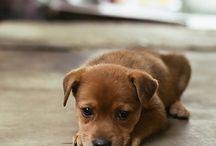 Dogs / by J. J.