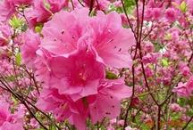 Flowers / by Dawn H