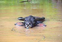WildLife - Animals / Wildlife photographer