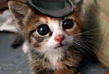 Cute Cat | Kitten Videos / a collection of sweet adorable cat & kittens videos.