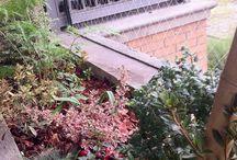 Mis jardines proyectados