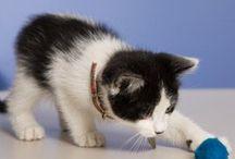 New Kitten Care
