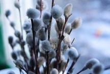 spring / by Elisabeth Kelly