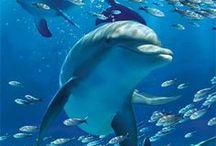ocean life pics