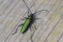 Animals, Plants & Nature / Wir beschäftigen uns auch mit Tausendfüssern, Asseln, Käfern und Heuschrecken aus aller Welt.