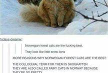 cazy cat lady