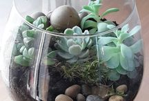 Флорариум / Garden / Цветы / Aqua