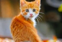 chatons damour love