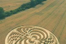 Kreise des Korns