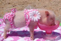 I ❤️ mini pigs
