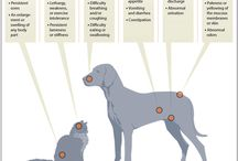 Cat Infographics / Interesting info about cats
