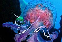 Ocean beauty / Celebrating the ocean life that inspires our office aquarium.