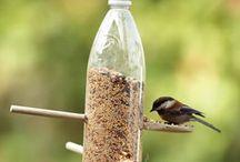 bird feeders.