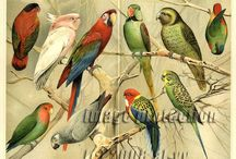 1000 PARROTS / World of Parrots / by Pedro Torres