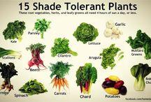 shade tolerant