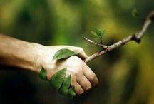 Doğa / Doğa dostu temalar